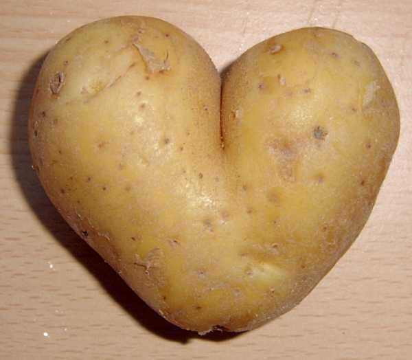 Картофель рисунок для детей – Раскраска картошка