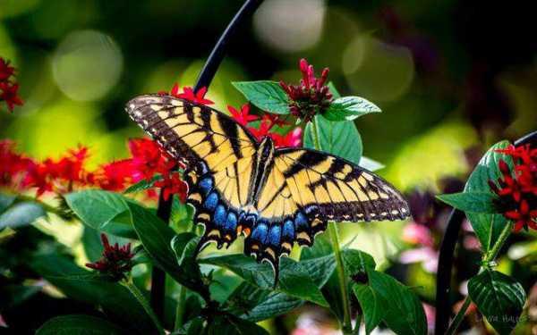 Красивая бабочка рисунок – Смотреть картинки и фото ...