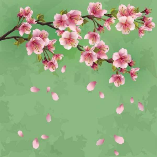 Рисунок веточка сакуры – Как нарисовать сакуру поэтапно?