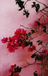 The Hashemite Kingdom of Jordan Photography By Charlotte Farhan Flowers in Aqaba