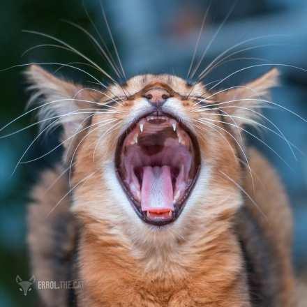 @errol.the.cat