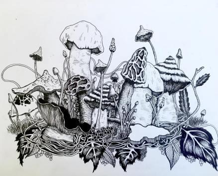 ashwhittakerillustration 10