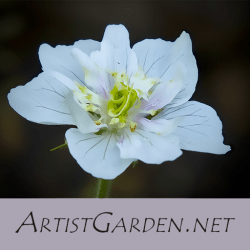 ArtistGarden.net