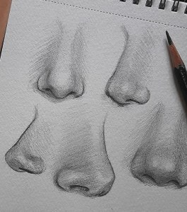 nose drawing pencil