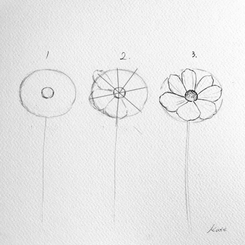 How to draw flowers for beginners? 77