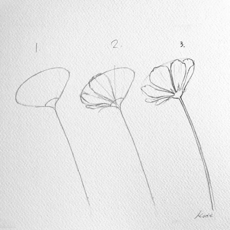 How to draw flowers for beginners? 73