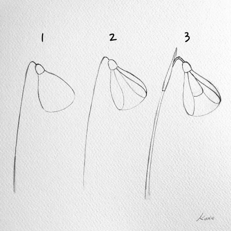 How to draw flowers for beginners? 101