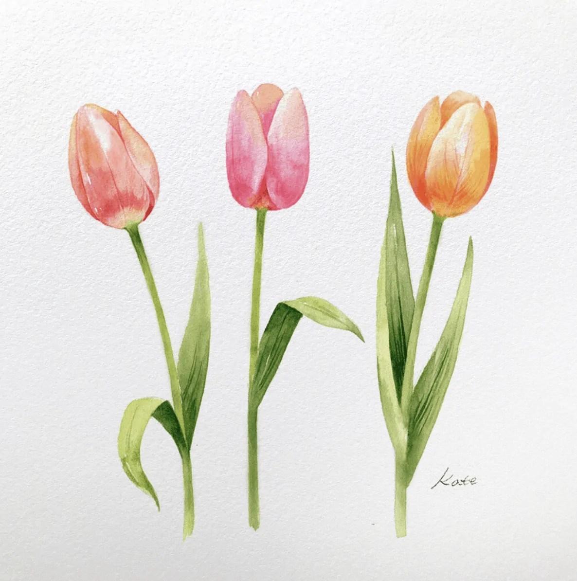 tulips watercolor