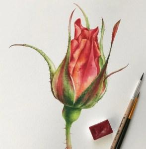 watercolor rose inspo