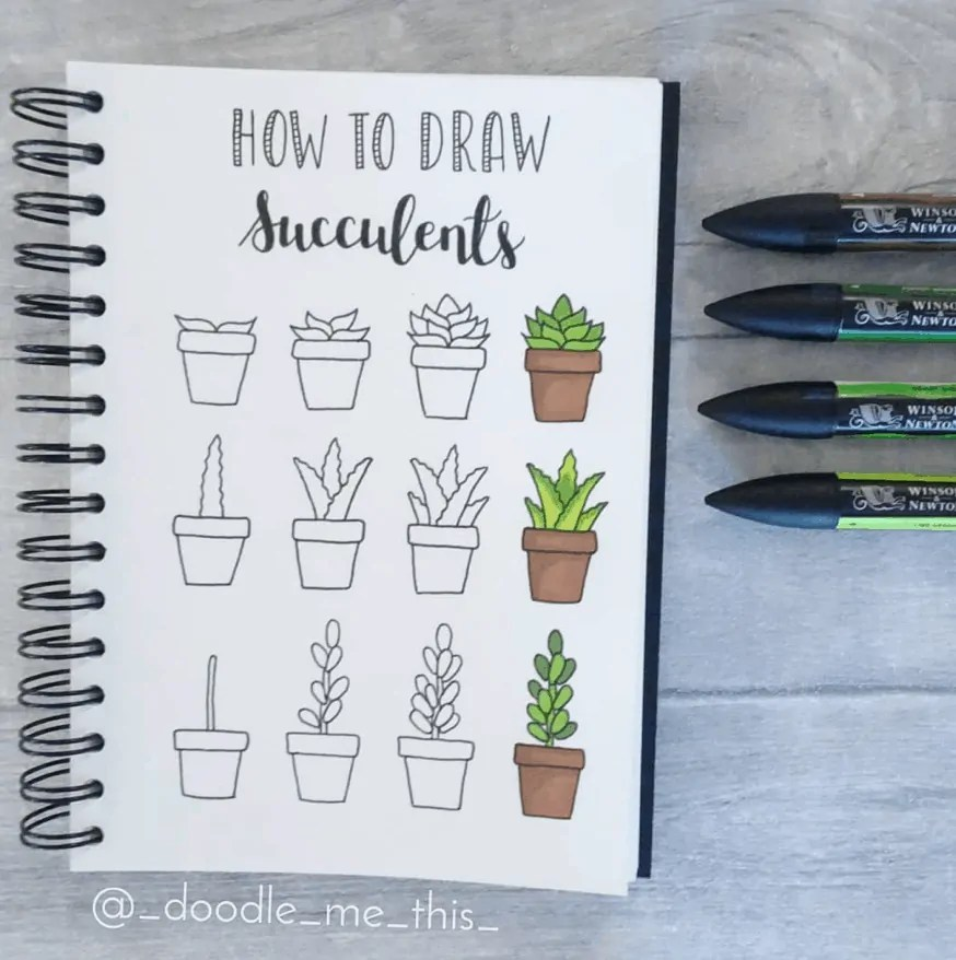 how to draw succulents