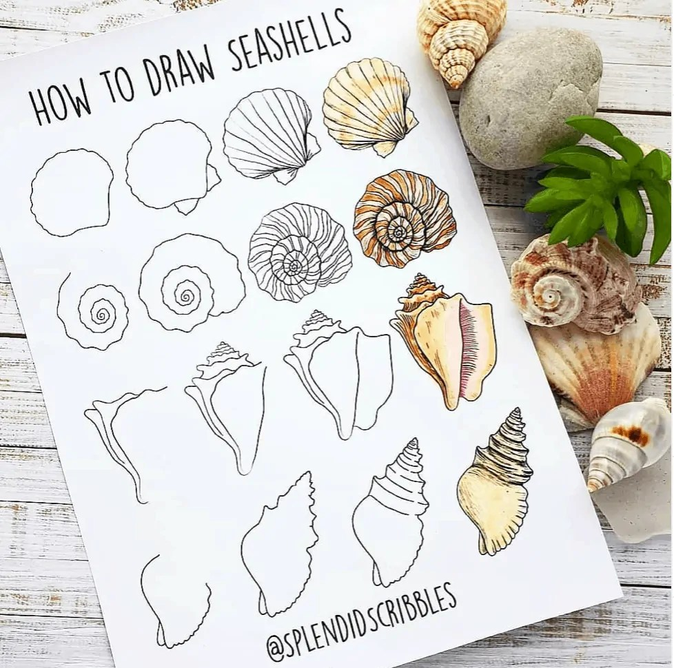 how to draw seashells