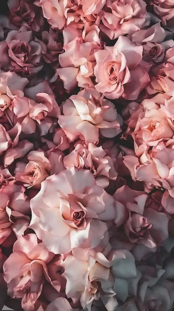 45-Beautiful-Roses-Wallpaper-Backgrounds-For-iPhone 5