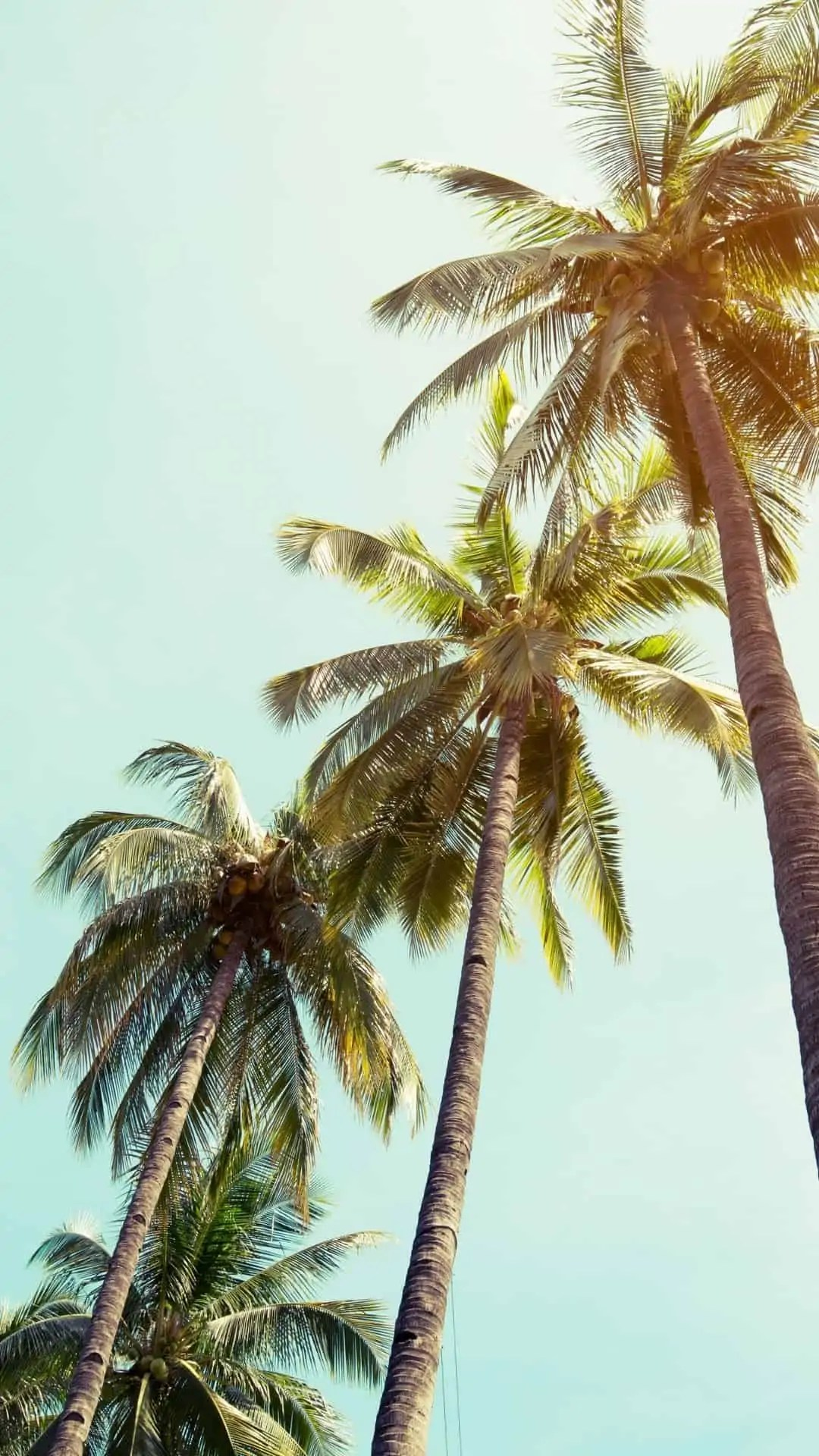 summer-palm-trees 5