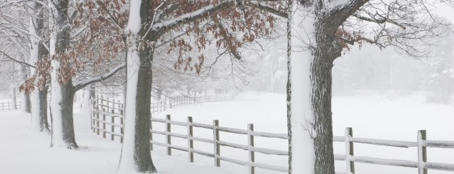 Large snow covered trees next to a snow covered split rail fence