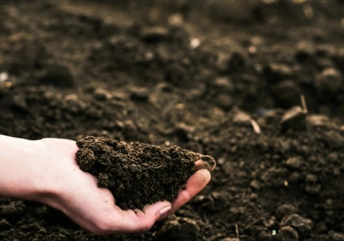 person holding dirt in their hand