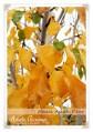 December Orchard Tasks