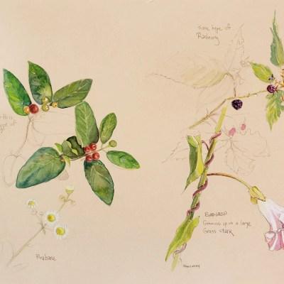 floral artwork titled Island Park Studies