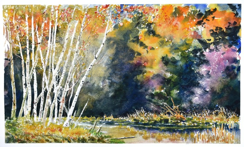 A watercolor painting of shining birches on a small islet in a pond