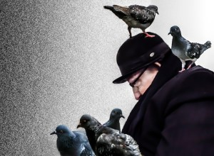 levy_The man who loved pigeons