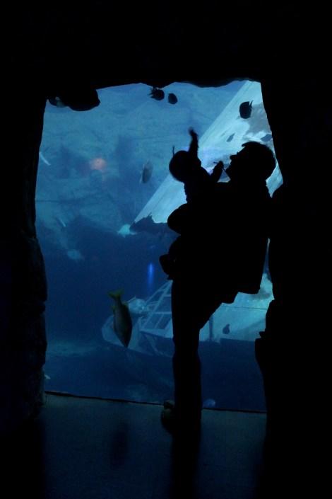 Title:The Aquarium Medium:Photography Size:1.6MB