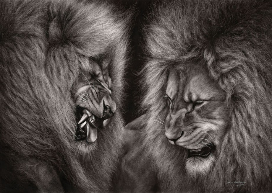 "Title:Lion Fight Medium: Oil on paper. Dry brush technique Size: 35""x25"""