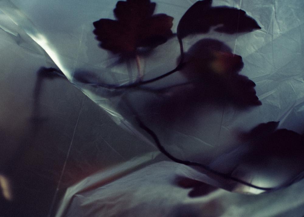 Title: Otium 1 Medium: photography