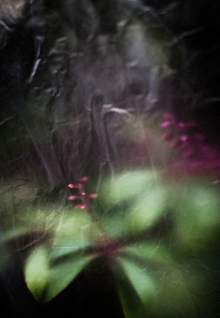 Title:Otium 2 Medium:photography