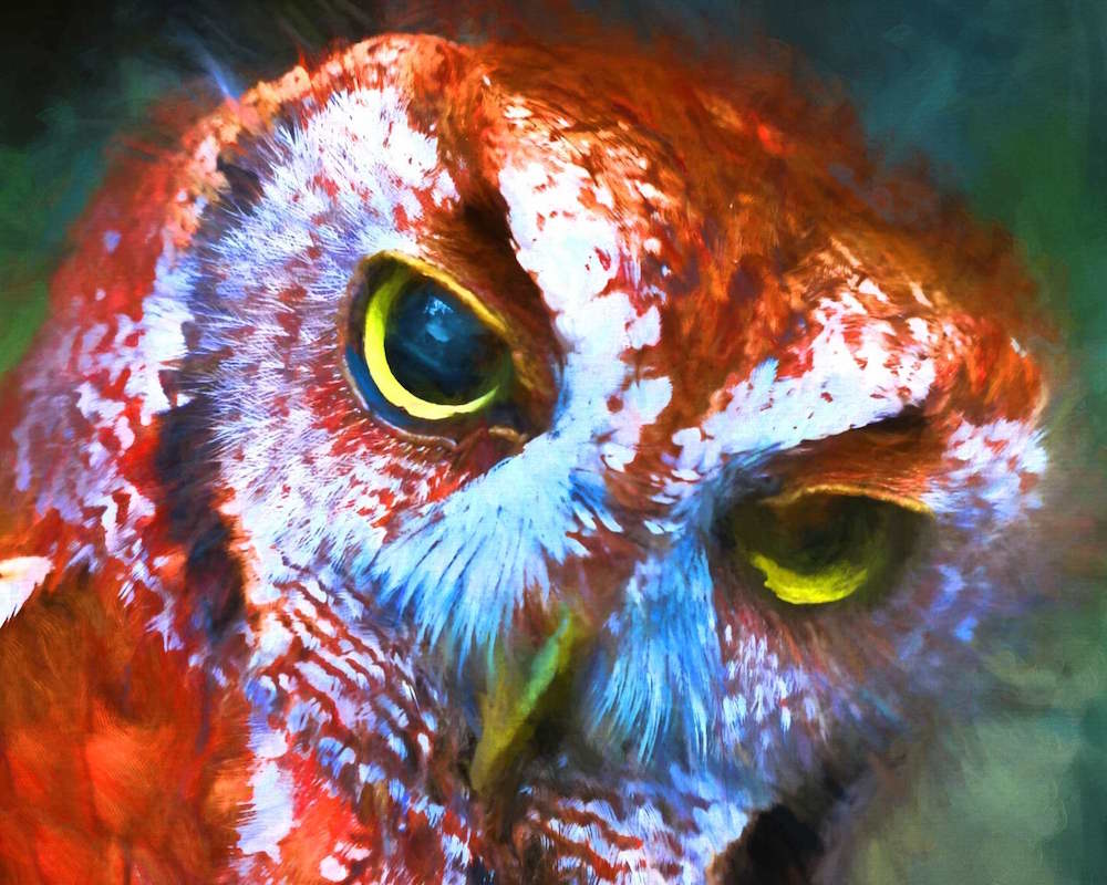 Title: red OWL Medium: DIGITAL PAINTING Size: 13 X19
