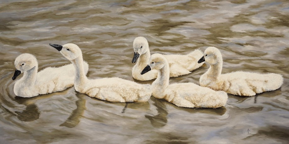 Title:Cygnets Medium:	Oil Size:	24 x 48