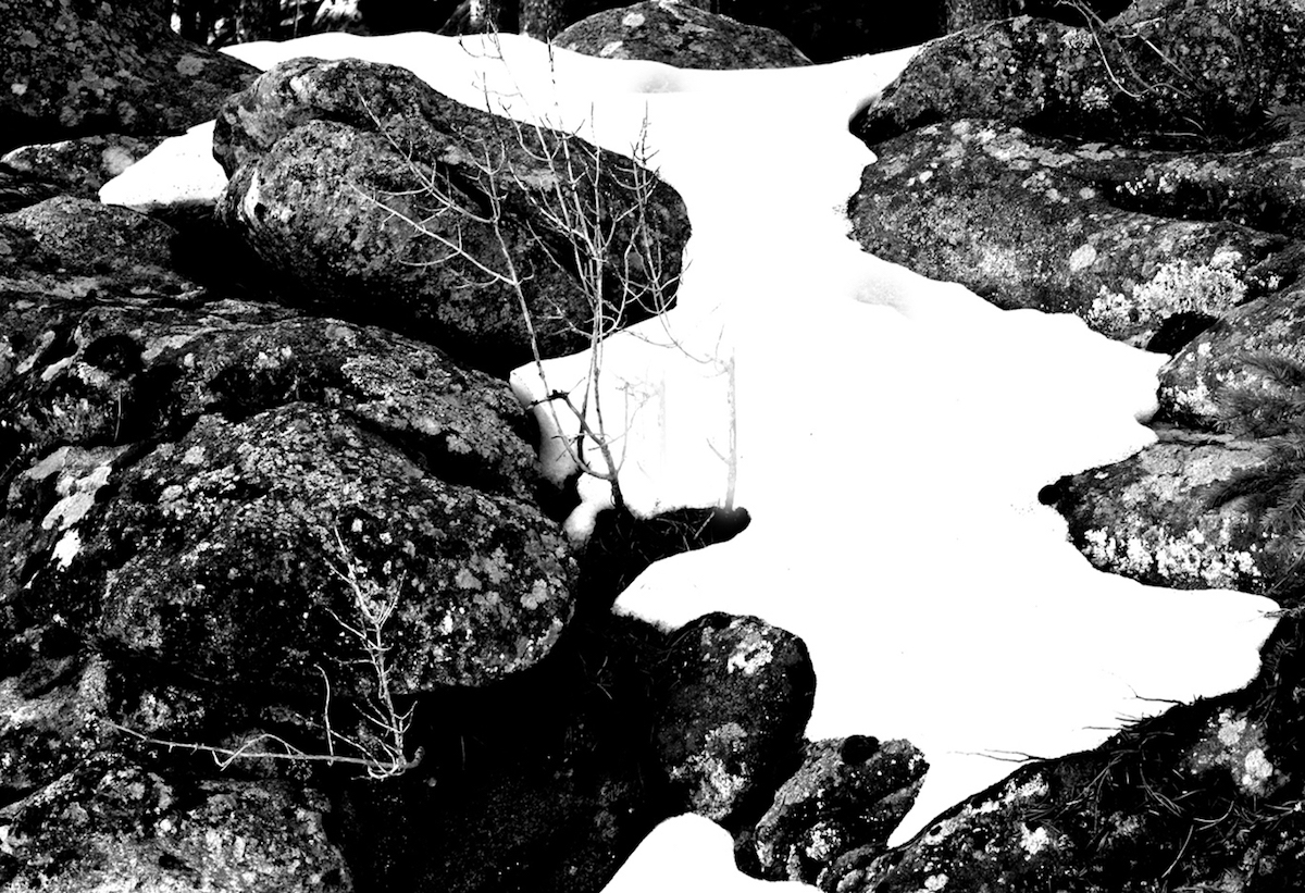 Title: Rocks, Snow, Lichens and Branches Medium: Photography Size: 19x13