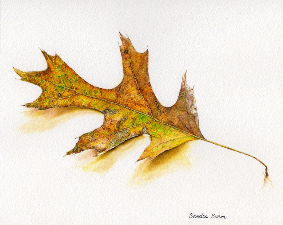 Title:Simply A Leaf Medium:Watercolor Size:8 x 10