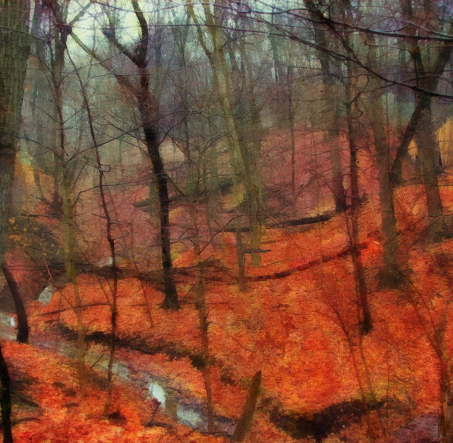 "Title Last Days Of Autumn Medium Photography Size 24"" x 18"""