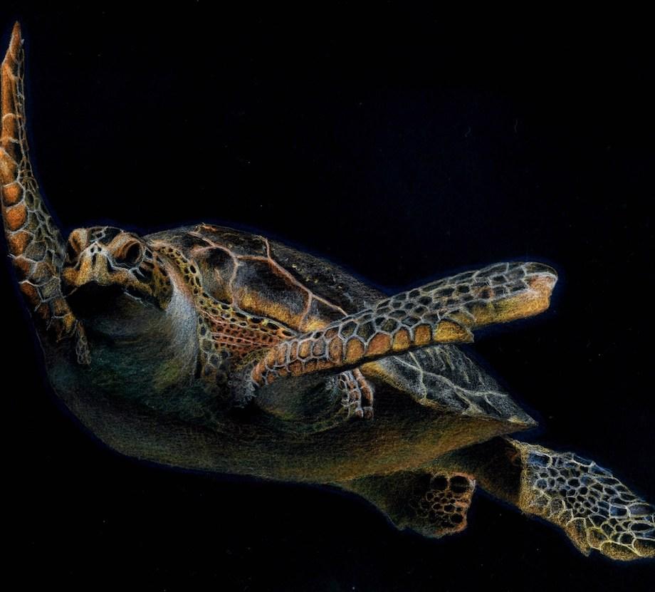 Title Sea Turtle Medium Colored pencil Size 20x 30 cm