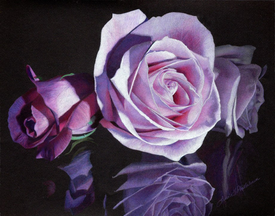 Title Evening Rose Medium Colored Pencil Size 11x14