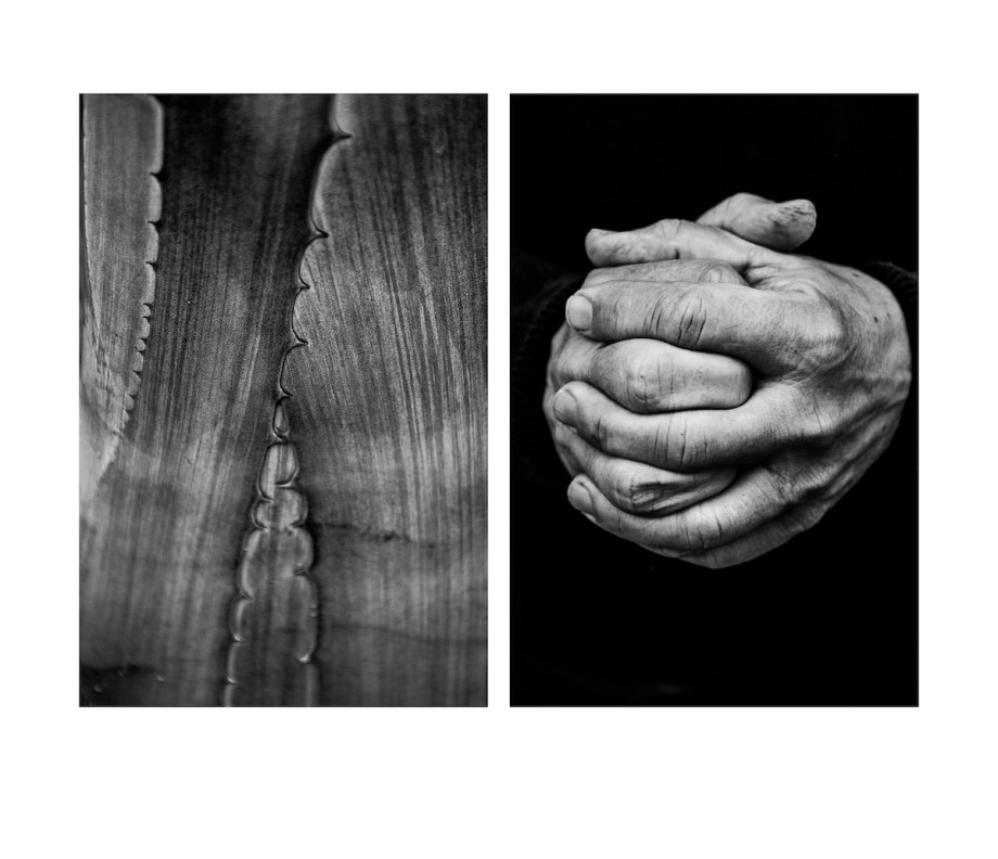 Title Diptych Number 4 Medium photography Size 33 x 28 cm