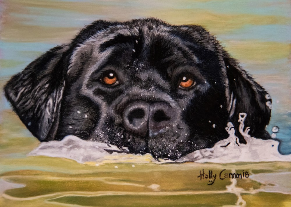 "Black Lab Medium pastels on Velour Size 9"" x 14"""