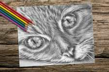 http://artistrybylisamarie.com/product/printable-coloring-page-cat-close-up/
