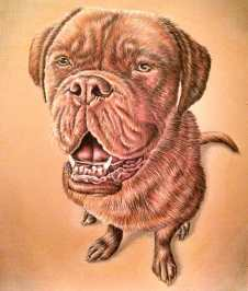 """""""Dog Sitting on Orange"""" 11""""x14"""" Colored Pencil on Paper, SOLD"""