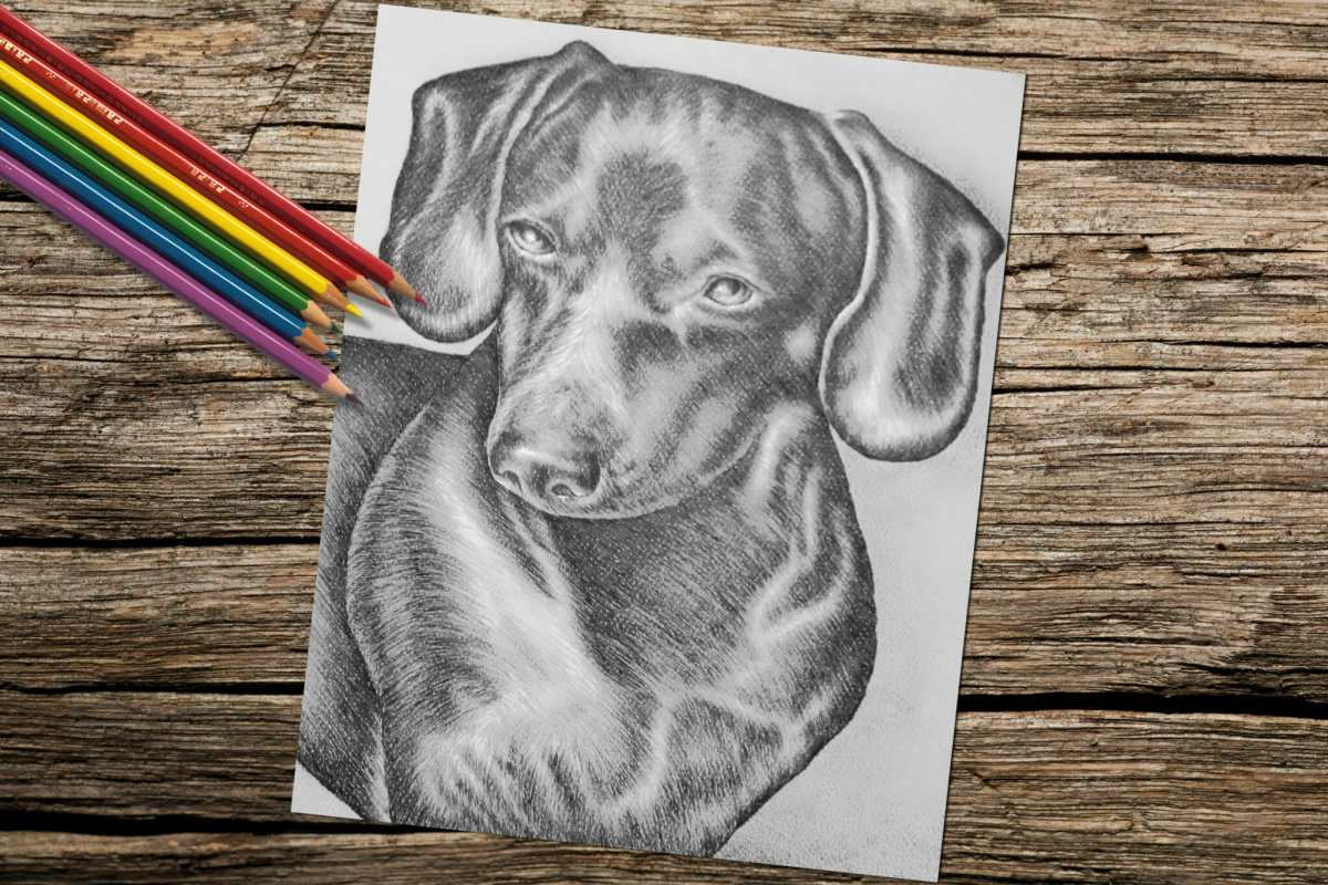 Printable Coloring Page: Dachshund - Artistry by Lisa Marie