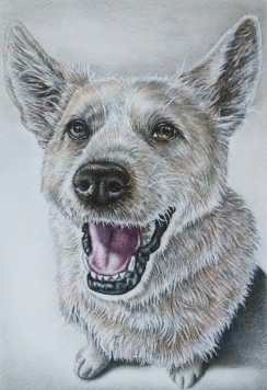 """""""Dog Sitting"""" 8""""x10"""" Colored Pencil on Paper, SOLD"""