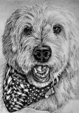 """Dog with Bandana"" 5""x7"" Graphite Pencil on Paper, SOLD"
