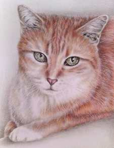 """Tabby Cat"" 8""x10"" Colored Pencil on Paper, SOLD"