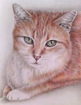 """""""Tabby Cat"""" 8""""x10"""" Colored Pencil on Paper, SOLD"""