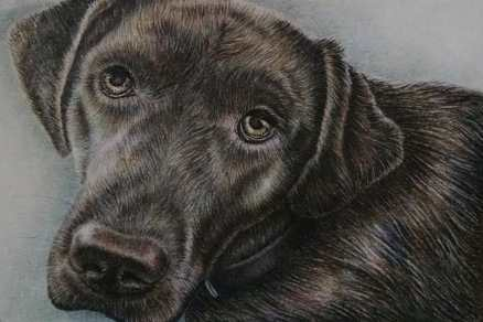 """""""Labrador Up Close"""" 5""""x7"""", Colored Pencil on Paper, SOLD"""