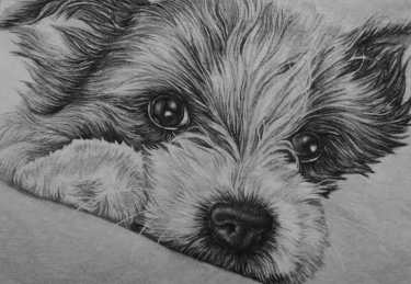 """Puppy Drawing"" Graphite Pencil on Paper, 5""x7"" SOLD"