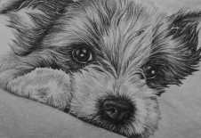 """""""Puppy Drawing"""" Graphite Pencil on Paper, 5""""x7"""" SOLD"""