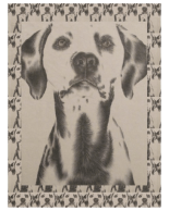 http://www.zazzle.com/drawing_of_dalmatian_on_blanket-256709113226938504