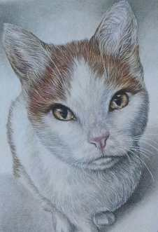 """""""Drawing of Cat Sitting"""" 5""""x7"""" Colored Pencil on Paper, SOLD"""