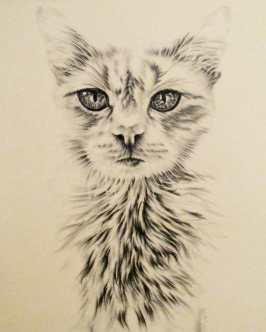 https://www.etsy.com/listing/234369669/cat-print-cat-art-cat-poster-cat-wall?ref=shop_home_active_33