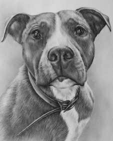 """""""Pitbull Portrait"""" Graphite Pencil on Watercolor Paper, 8""""x10"""", SOLD"""